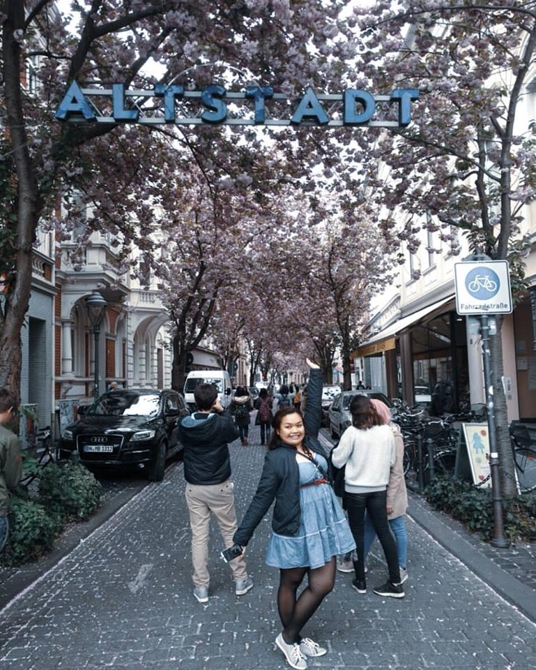 Bonn's Altstadt's famous cherry blossom